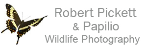 Robert Pickett Wildlife Photography